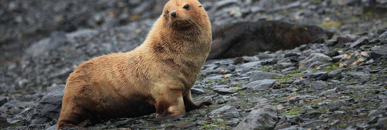 Orkney Marine-life Aquarium